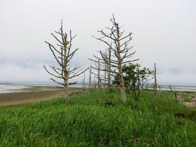 道東・野付半島・トドワラハイキング2