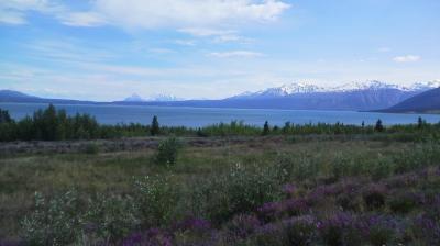 アラスカ・カナダユーコンドライブ旅行(その4) フェアバンクス→(国境)→ホワイトホース