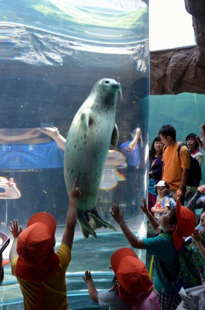 自然を満喫する夏の北海道16日間の旅 (2)旭山動物園で童心に帰る