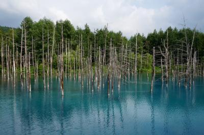 富良野&美瑛と青い池