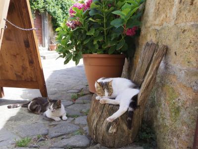 猫に会いに岩上都市チヴィタ ディ バニョレージョ&オルヴィエートに行ってきました!