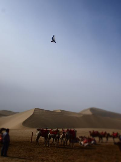 敦煌の旅その8 鳴沙山でラクダとたわむれる!の巻