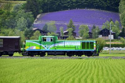 夏の北海道を巡る旅 ~富良野・ファーム富田の見渡す限りのラベンダーの絨毯を見に訪れてみた~