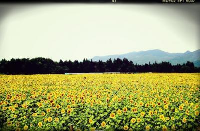 2014 夏キャンプ@新潟 津南