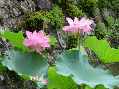 母と行く長弓寺☆こんな近くに、国宝の本堂があります(^_^)v
