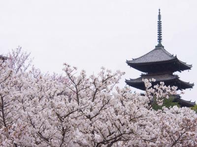 2014.04京都・奈良:遅咲きの桜を求めて~その2.仁和寺と妙心寺