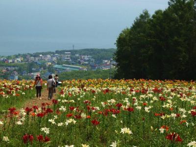 初夏の北海道 花の玉手箱 4日目 春香山ゆり園へ 下