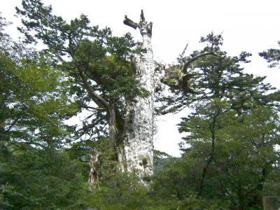 世界自然遺産の屋久島満喫の旅三日間
