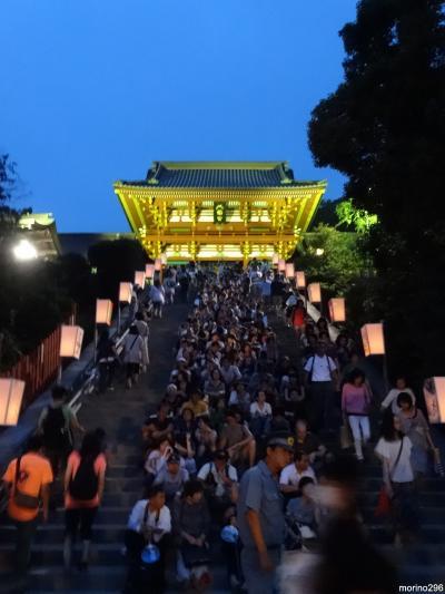 鶴岡八幡宮のぼんぼり祭