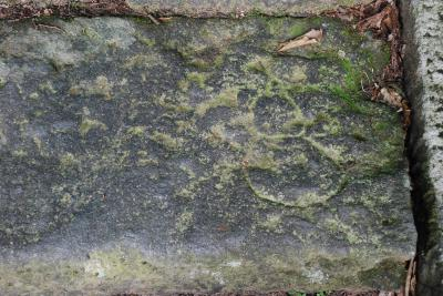 羽黒山参詣道の石段から珍しい彫り物探し(山形)