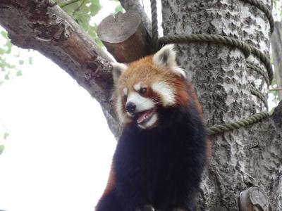 2014/6 北海道招待旅行[2] 2日目 旭山動物園