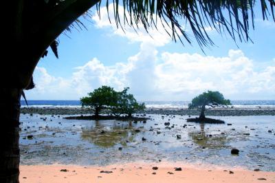 ミクロネシアでホームステイ。【コスラエ】の旅(5)~超ワイルドなウナギ漁