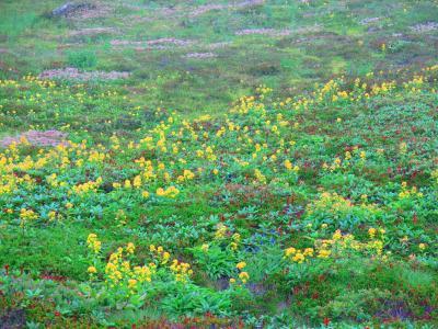 2014年夏休み 5泊6日の北海道旅行第3日PART1 ~雲の中のトレッキング編~