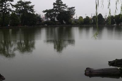奈良公園の鹿と猿沢池