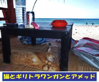 猫とギリトラワンガンとアメッド