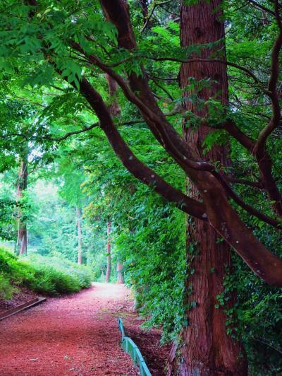生命の森リゾートa ホテルT書斎内で昼食バイキング ☆梅園コースを散策し