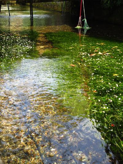 子どもと一緒に涼む、梅花藻咲く中山道の宿場町・醒井~近江のむかし町をあるく~