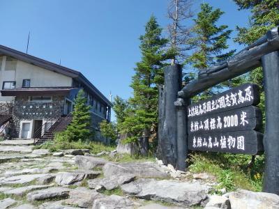志賀高原の夏休み<3> (東館山高山植物園)