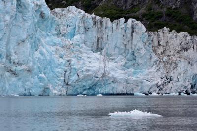 アラスカ 北の大地&野生動物(8/全9): プリンス・ウィリアム湾 氷河クルーズ 26の氷河&ラッコの大群