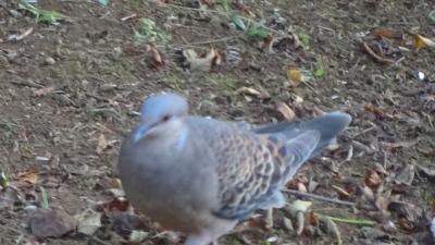早朝散歩を中止し、庭に来た鳥さんの撮影をしました。