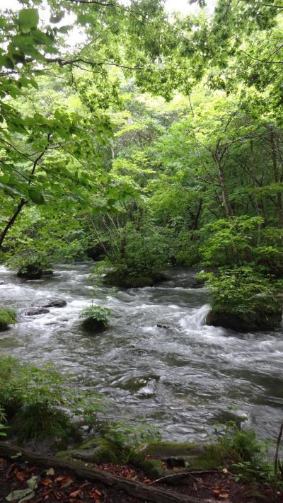 おいらせへ!奥入瀬白糸の滝から銚子大滝まで歩く