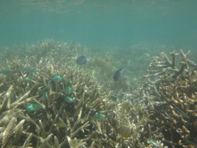 2012年秋はオーストラリアに行ってみました。(6) フィッツロイ島で再び潜る!!
