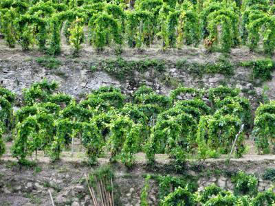 2014 France & Italy : vol.1 Rhone