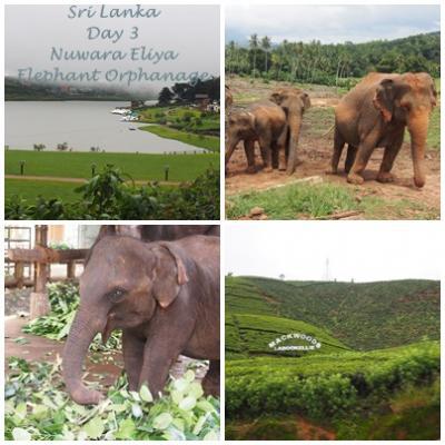 2.5日間で欲張りスリランカ! ~ヌワラエリヤからコロンボ~ 2014年夏 南アジア旅行⑩