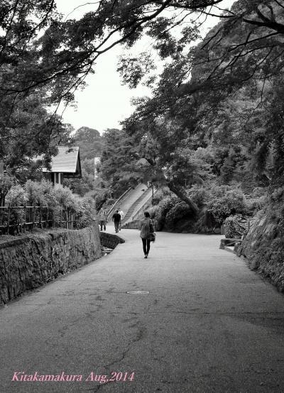 【神奈川県(北鎌倉)】 古都・鎌倉散歩♪ 禅文化を現代に伝承する鎌倉五山第一位の大本山「建長寺」