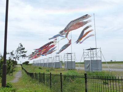 吉田公園の鯉のぼり