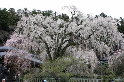 日帰りバス旅行、桜の名所めぐり