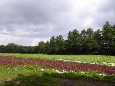 優雅な避暑 浅間高原♪ Vol2 ☆旧六合村の花豆ソフトクリームを求めて♪
