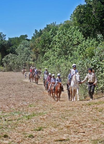 ケアンズへ・夏休み家族旅行7日間(7)(8月27日・乗馬ツアー、土ボタルツアー)