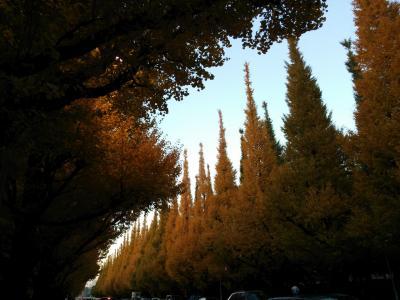あの銀杏並木