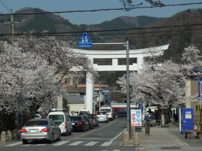 桜の花見めぐり