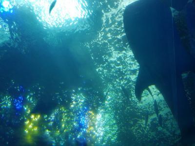 初めてのひとり旅沖縄3泊4日⑦バスツアー美ら海水族館
