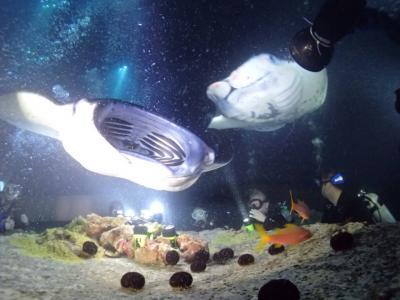 ハワイ島②マンタナイトとイルカと沈船
