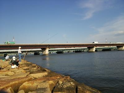 十三・淀川河川敷での野鳥観察・淀川での魚釣り