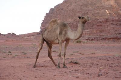 ワディラム行ったよ。砂漠の中でキャンプしたよ。
