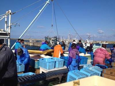天塩漁港の秋鮭水揚げ