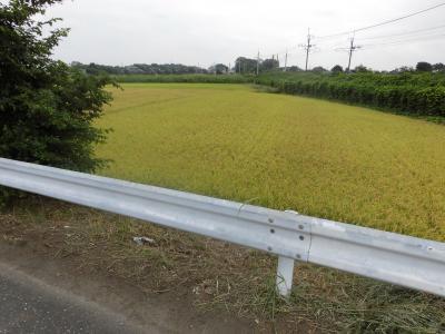 上尾の田んぼ道を散歩。