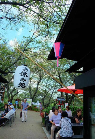 埼玉県幸手市の権現堂の「曼珠沙華」見頃です 中