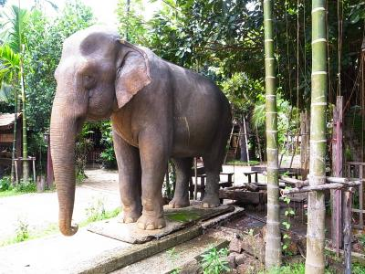 Chiang Mai生活43(9月)