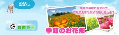 愛知牧場・四季彩の丘・黄花コスモス
