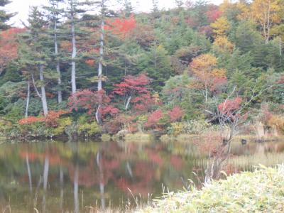 時間が出来たら、旅に出る♪(^・^)今年の紅葉は早い?(^。^;白根山「富貴原の池コース」前編。