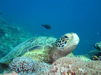 沖縄・座間味島でダイビング