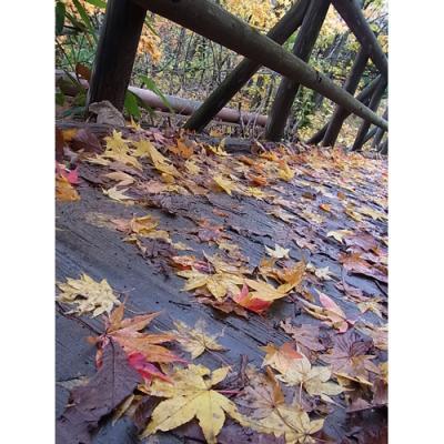 錦秋の小樽・ニセコ・登別を歩く