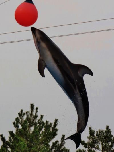 新潟2 マリンピア日本海 イルカショー観覧2回  ☆ハイジャンプの一瞬も