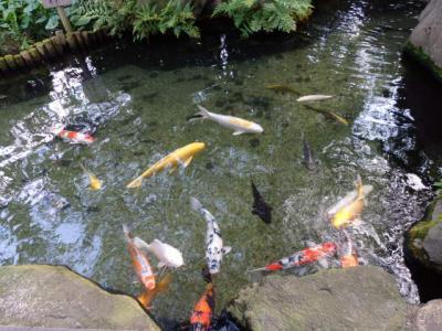 日本の旅 関西を歩く 大阪市天王寺区の一心寺(いっしんじ)本堂周辺
