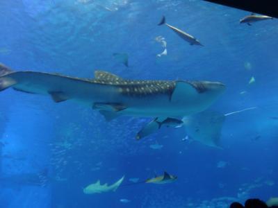 ☆1歳半子連れ旅行in沖縄2日目☆ エメラルドビーチと美ら海水族館